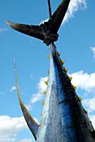 cozumel sportfishing